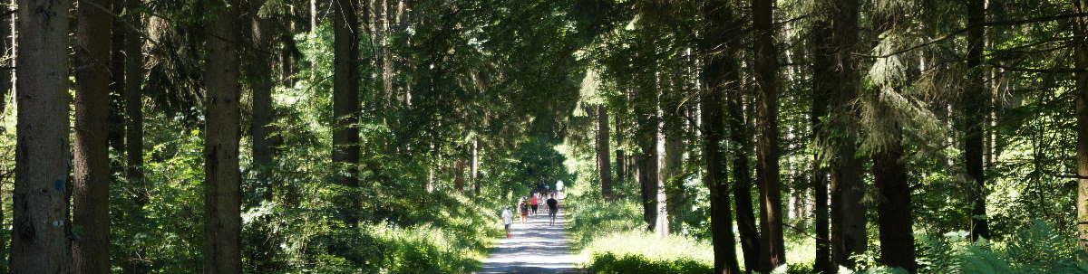 Wald bei Bruchmühlbach-Miesau