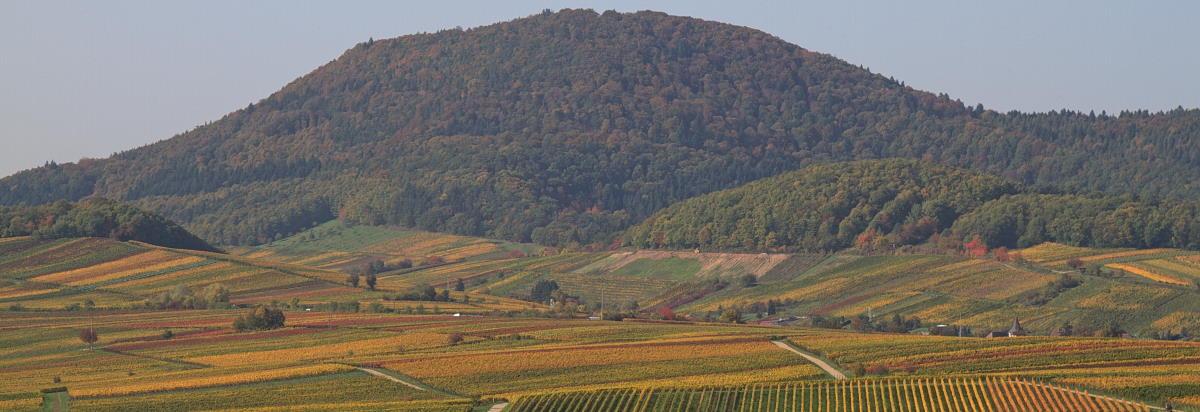 Weinberge Landau-Land