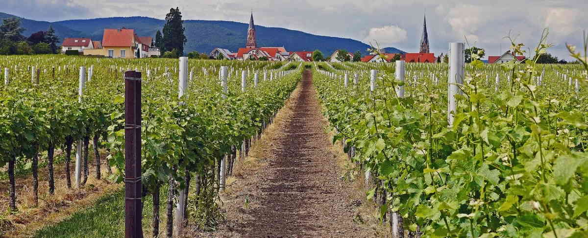Edenkoben in der Pfalz