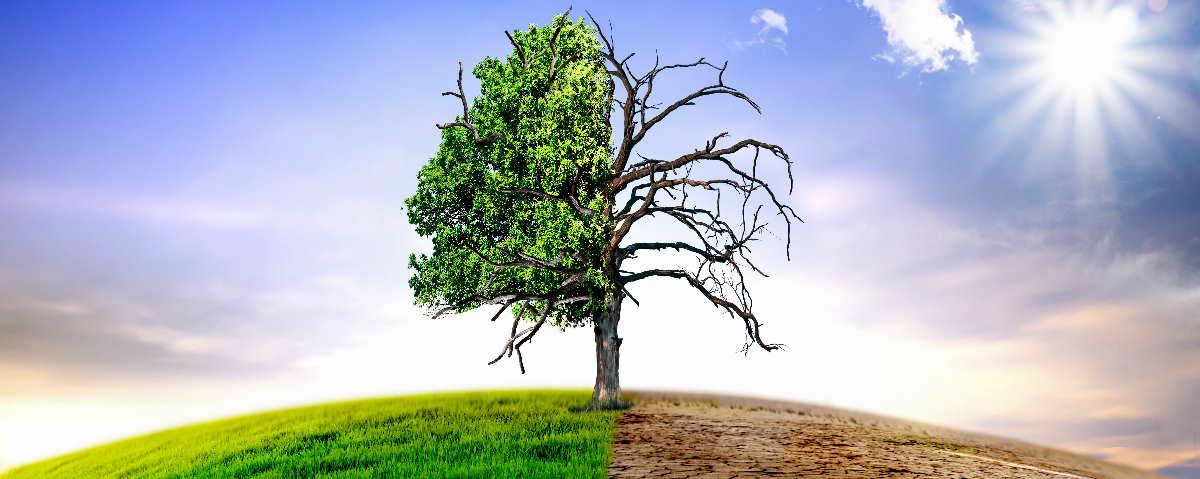 Folgen des Klimawandels in der Pfalz sichtbar (Symbolfoto)