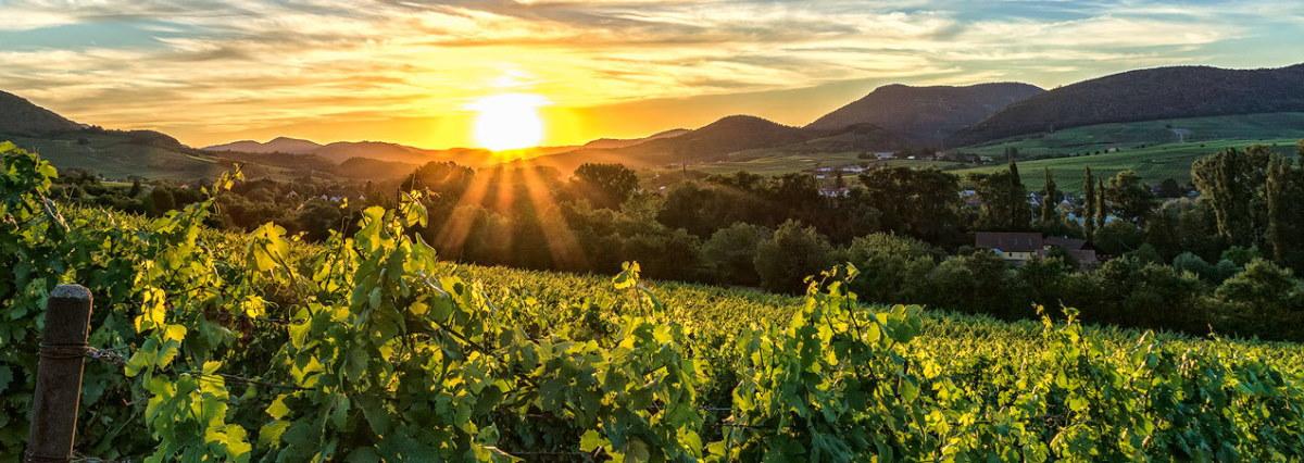 Urlaub in der Pfalz: Wandern, Sehenswürdigkeiten in der Pfalz, Wein, Historisches, Ausflugstipps, Badeseen, Schwimmbäder, Weinfest digital
