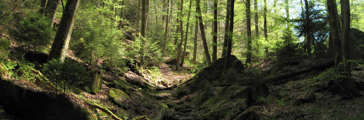 Wandern in der Pfalz: Wanderwege, Wandervereine, Sehenswürdigkeiten, Wanderhütten in der Pfalz